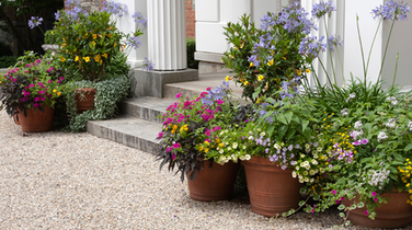 Home Staging Tips #2: Creating Curb Appeal