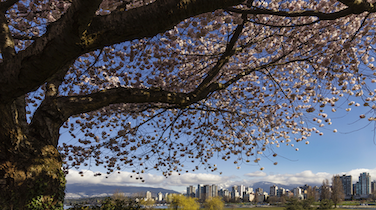 Spring Hits Early with Vancouver Home Sales Up 21% in February: REBGV