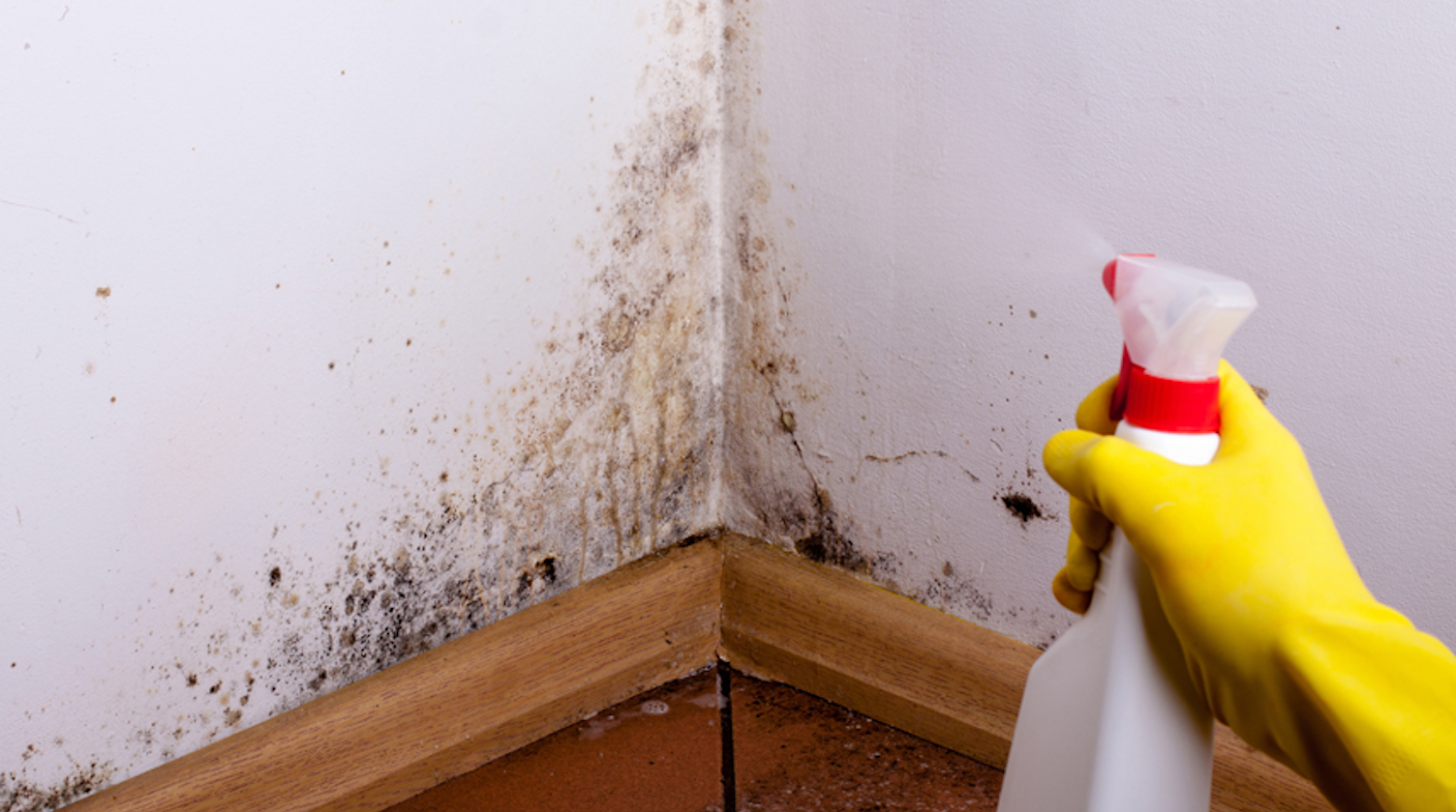 Household Mold: Five Key Problems and Their Solutions | REW