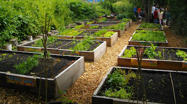 Beat the Rising Cost of Produce with our Spring Vegetable Gardening Tips