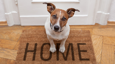 How to Sell a Home When You Have Pets
