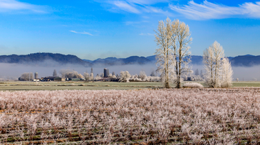 January Home Sales, Prices See Sunnier Conditions in the Fraser Valley: Stats