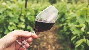 The Best Wine Tours in Kelowna