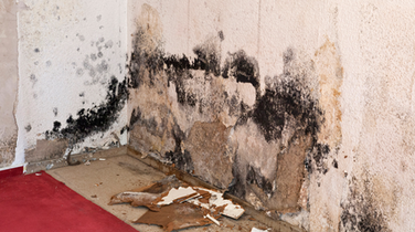 Mold in a Crawlspace and How to Deal With It